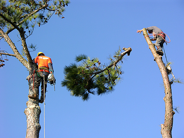 top rated tree services Oceanside CA