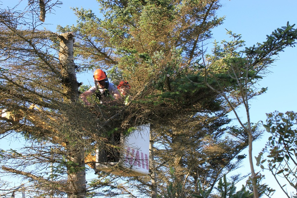 affordable tree service in Oceanside CA