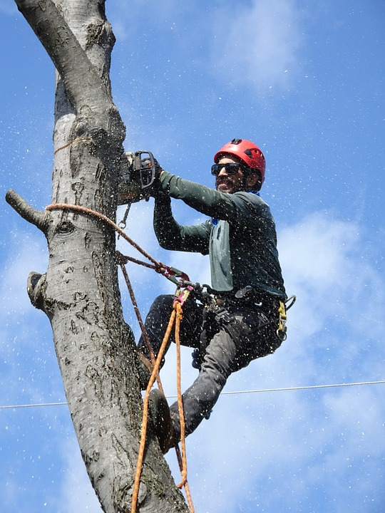 Oceanside's top rated tree trimming services